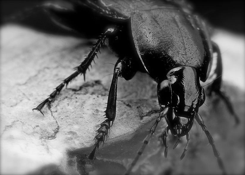 beetle-562035_1920